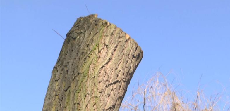 Nowe zmiany dotyczące wycinki drzew i krzewów