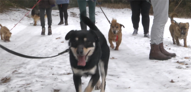Psy do adopcji na spacerze