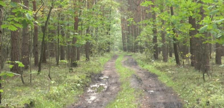 Bezpieczeństwo w lesie i na drodze
