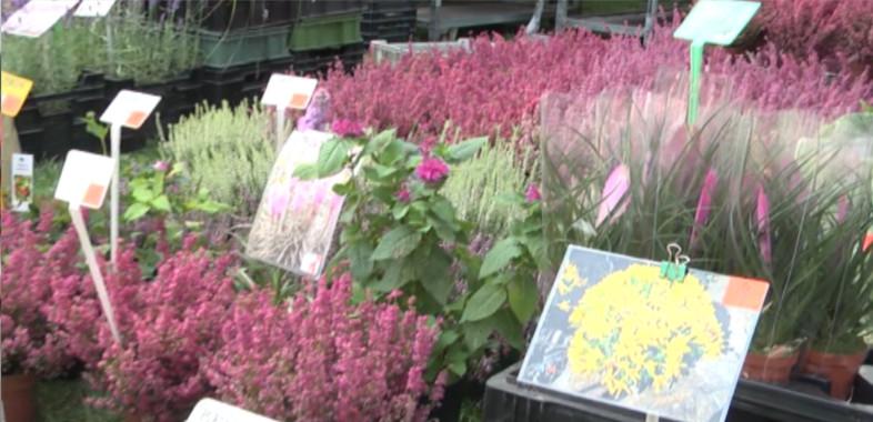 Regionalna wystawa rolno- przemysłowa powiatu zduńskowolskiego