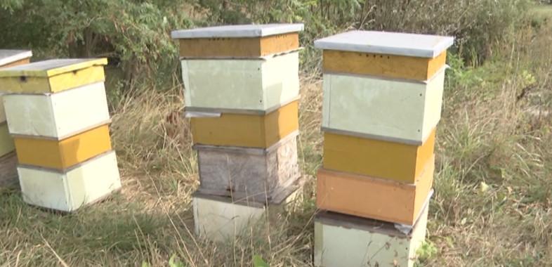 Apel o pszczołach